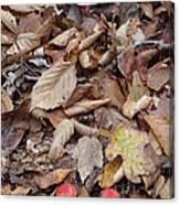 Mushroom And Leaves Canvas Print