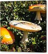 Mushroom Tops Canvas Print