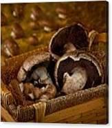 Mushrooms In A Basket Canvas Print