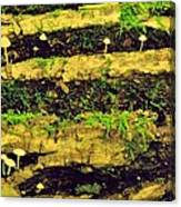 Mushrooms Lichen And Moss On Log Canvas Print