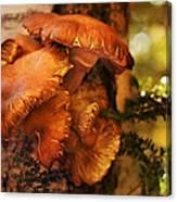 Mushrooms Untitled 2754 Canvas Print