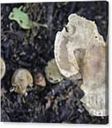 Mushy Mushrooms Canvas Print
