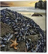 Mussel Beach Canvas Print