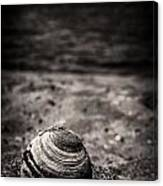 Mussel On The Beach Canvas Print