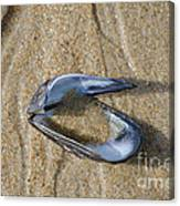 Mussel Shell On The Beach Canvas Print
