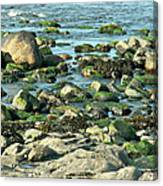 Mussels And Moss Canvas Print