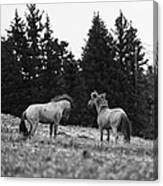 Mustang Challenge 6 Bw Canvas Print