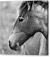 Mustang Close 1 Bw Canvas Print