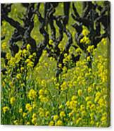 Mustard And Old Vines Canvas Print