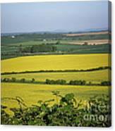 Mustard Colour Fields Canvas Print