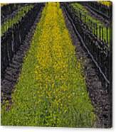 Mustard Grass In Vineyards Canvas Print