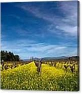 Mustard In The Vineyard 2 Canvas Print