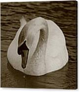 Mute Swan - In Sepia Canvas Print