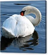 Mute Swan No. 2 Canvas Print