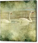 Mute Swan Pair Canvas Print