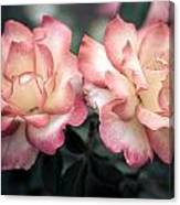 Muted Pink Roses Canvas Print