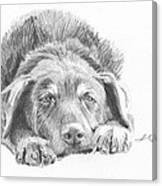 Mutt Pencil Portrait Canvas Print