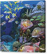 Mutton Reef Re002 Canvas Print