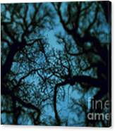 My Blue Dark Forest Canvas Print