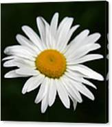 My Daisy Canvas Print