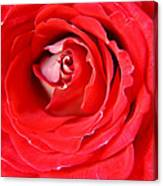 My Delicate Rose Canvas Print