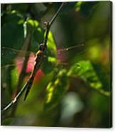 My Dragonfly Canvas Print