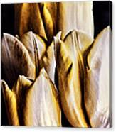 My Favorite Tulips Canvas Print