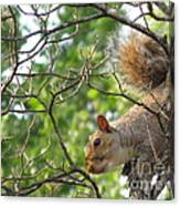 My First American Squirrel Canvas Print