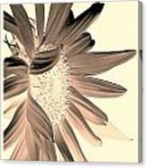 My First Sunflower Canvas Print