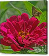 My Flower Canvas Print