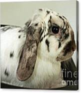 My Friend Bunny Canvas Print