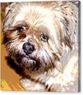 My Friend Lhasa Apso Canvas Print