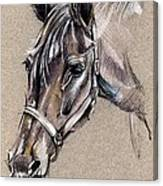 My Horse Portrait Drawing Canvas Print