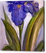 My Iris Canvas Print