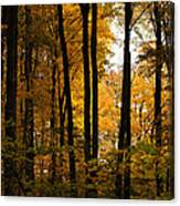 My Love For October Canvas Print