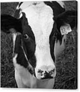 My Name Is Cow - Black And White Canvas Print
