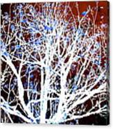 My Neighbor's Tree II Canvas Print