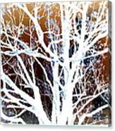 My Neighbor's Tree Canvas Print