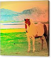 An Old Icelandic Mare, What Is Going On Inside Of Her  Canvas Print