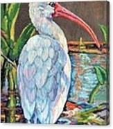 My One And Only Egret Canvas Print