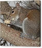 My Peanut Canvas Print