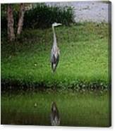 My Reflection - Heron Canvas Print