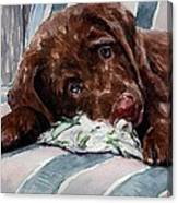 My Rope Toy Canvas Print