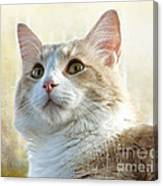 My Squishy Canvas Print