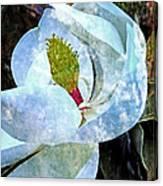 My Sweet Magnolia Canvas Print
