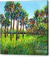 Myakka Palms Canvas Print