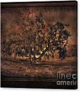 Mysterious Mesquite Canvas Print