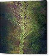 Mysterious Tree In Moonlight Canvas Print