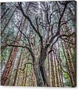 Mysterious Tree Canvas Print