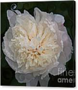 Mysterious White Peony Abstract Painting Canvas Print